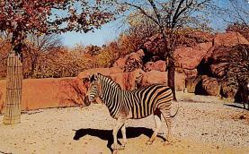 top008737 - Zebra