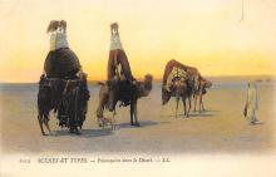 top008797 - Camel
