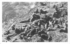 top008821 - Seals