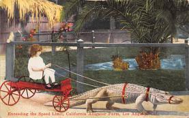 top008919 - Alligators