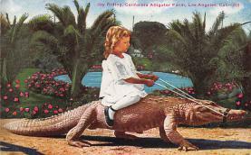 top008927 - Alligators