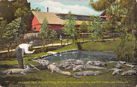 top008937 - Alligators