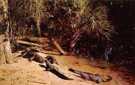 top008957 - Alligators