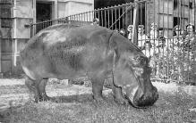 top009109 - Zoos