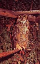 top009151 - Owl