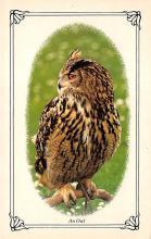 top009169 - Owl