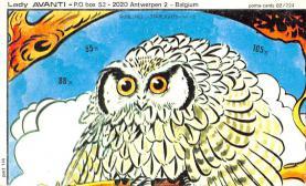 top009171 - Owl