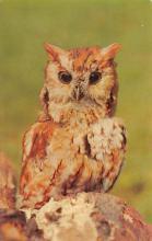 top009173 - Owl