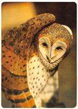 top009175 - Owl
