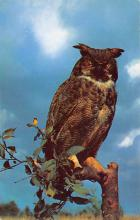 top009183 - Owl