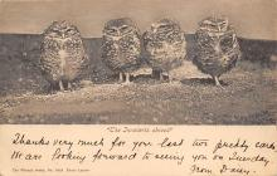 top009191 - Owl