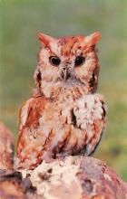 top009193 - Owl