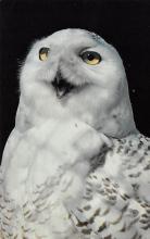 top009199 - Owl