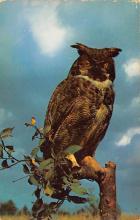 top009221 - Owl
