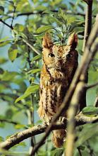 top009229 - Owl
