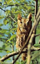 top009233 - Owl