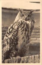 top009237 - Owl