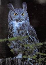 top009239 - Owl