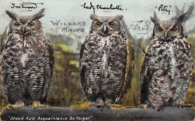 top009243 - Owl