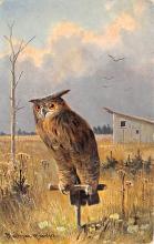 top009245 - Owl