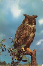 top009259 - Owl