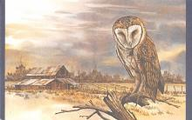top009269 - Owl