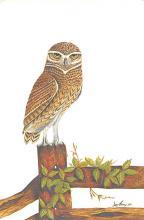 top009271 - Owl