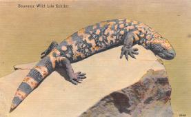 top009281 - Reptiles
