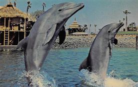 top009313 - Fish/Sea Mammals