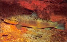 top009347 - Fish/Sea Mammals