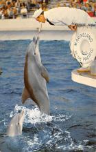 top009353 - Fish/Sea Mammals