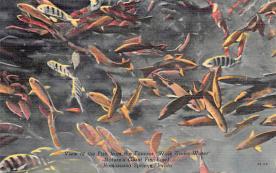 top009359 - Fish/Sea Mammals