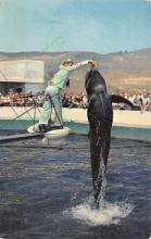 top009363 - Fish/Sea Mammals