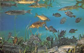 top009371 - Fish/Sea Mammals