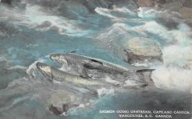 top009375 - Fish/Sea Mammals
