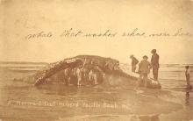 top009411 - Fish/Sea Mammals