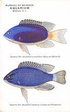 top009413 - Fish/Sea Mammals