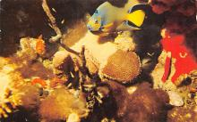 top009433 - Fish/Sea Mammals