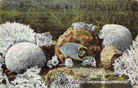 top009441 - Fish/Sea Mammals