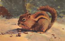 top009481 - Squirrel/Chipmunks/Woodchucks