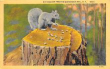 top009485 - Squirrel/Chipmunks/Woodchucks