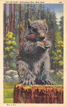 top009497 - Squirrel/Chipmunks/Woodchucks