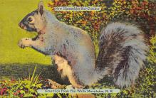 top009499 - Squirrel/Chipmunks/Woodchucks