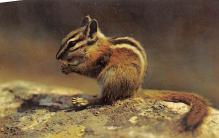 top009505 - Squirrel/Chipmunks/Woodchucks