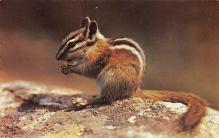 top009507 - Squirrel/Chipmunks/Woodchucks