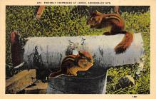 top009509 - Squirrel/Chipmunks/Woodchucks