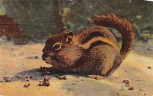 top009517 - Squirrel/Chipmunks/Woodchucks