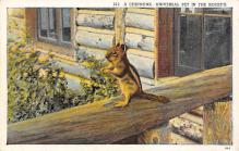 top009521 - Squirrel/Chipmunks/Woodchucks