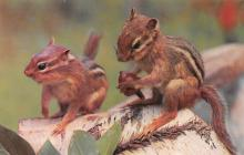 top009523 - Squirrel/Chipmunks/Woodchucks