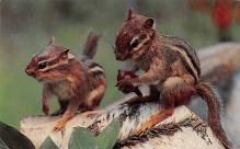 top009533 - Squirrel/Chipmunks/Woodchucks